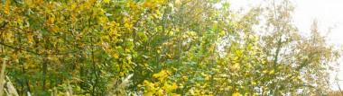 La loi sur la biodiversité modifie les conditions des exploitations des ressources génétiques.